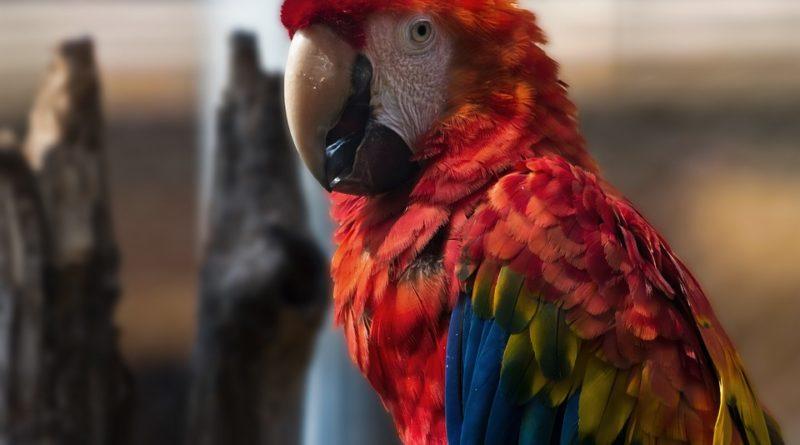 Obecné zásady chovu papoušků